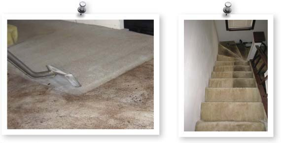 CarpetCleaningGroup2